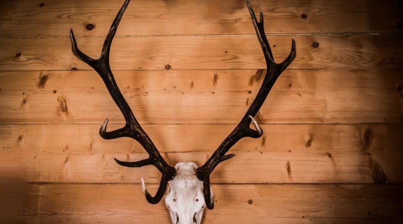 horns-436492