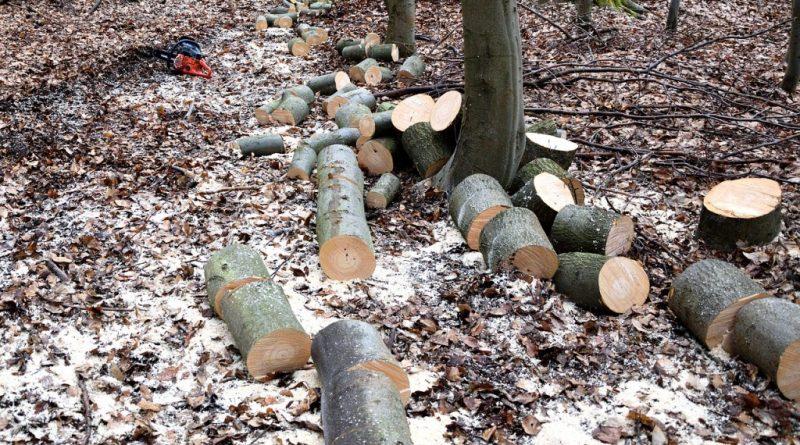 lumberjack-2146511_1280
