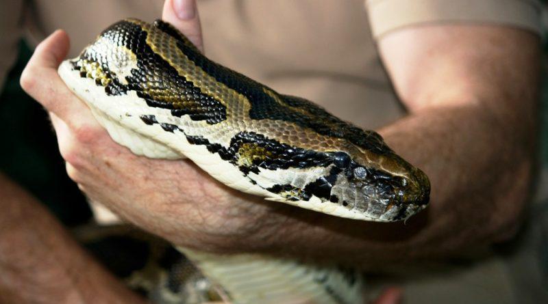 python-170743_1920