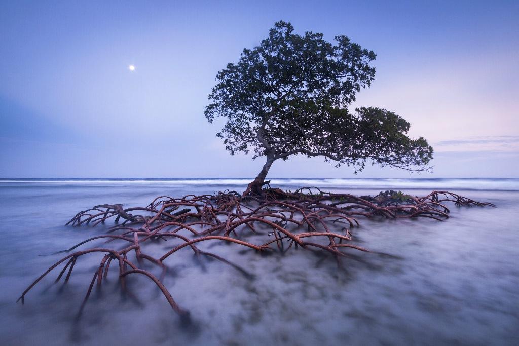 Strażnik plaży - Mac Stone (USA)