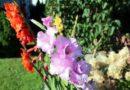 Sadzimy cebulki kwiatów