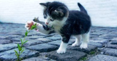 Kocia dieta – lista składników odpowiednich i nieodpowiednich dla kotów