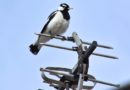 Tajemnice świata ptaków na Krzemionkach