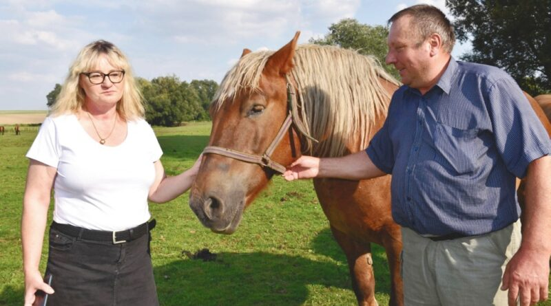 Piękne konie w galopie