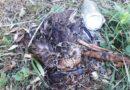 Wiemy, co zabiło kaczki w Parku Miejskim